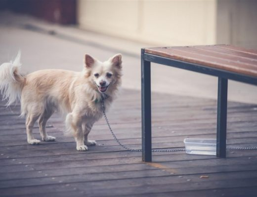 Urinary Bladder Stones in Dogs